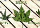 What's the Difference between Types of Weed (Indica, Sativa, Hybrid) and the Various Strains?